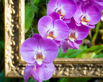 Orchids Spilling out of Frame