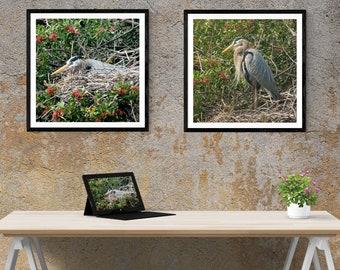 Great Blue Heron on Nest - BOGO