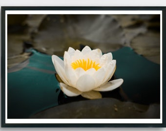 Peaceful Water Lily on lake, Spa decor or above bed wall decor. Printable Art