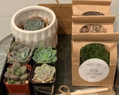 DIY Succulent Kit w Small Ceramic Container