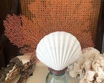 Antique Shell & Coral Bottle soldered Art
