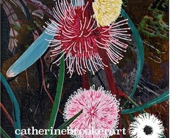 Hakea Laurina Flower Giclee Print