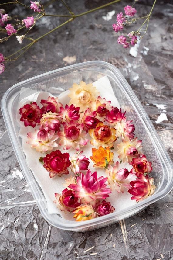 Strohblumen Mix getrocknet Blumen Trockenblumen für Schmuck Harz Resin Hobby Seife Kerzen Deko