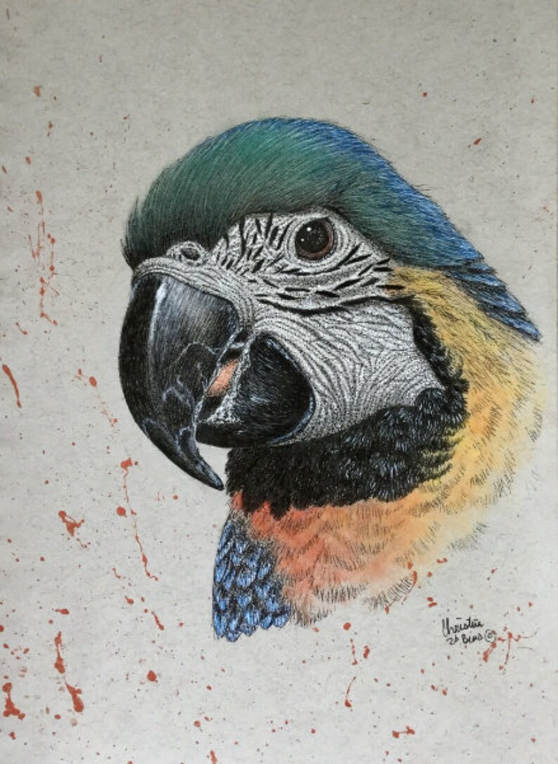 wall art Parrot drawing original drawing small parrot drawing mixed media drawing parrot parrot artwork original artwork home decor