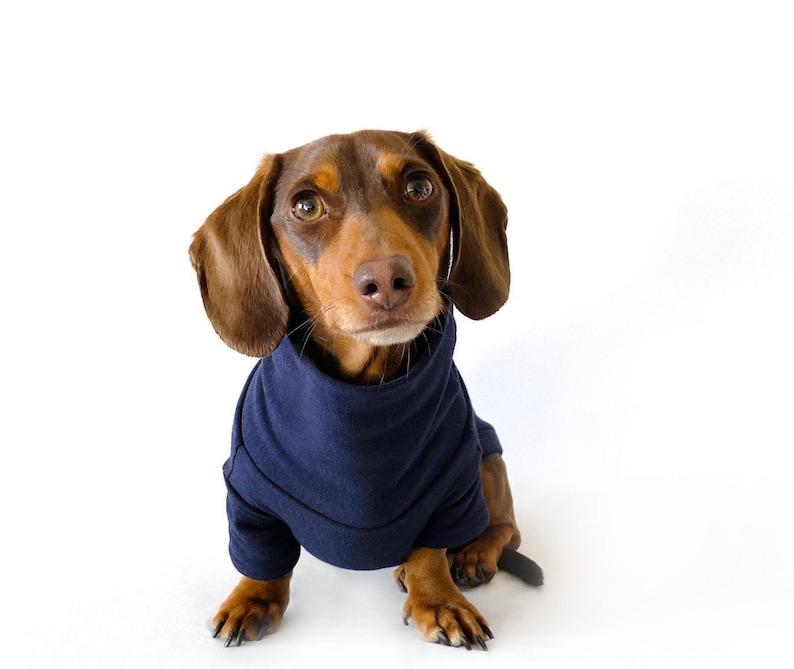 Dachshund wearing a blue jumper
