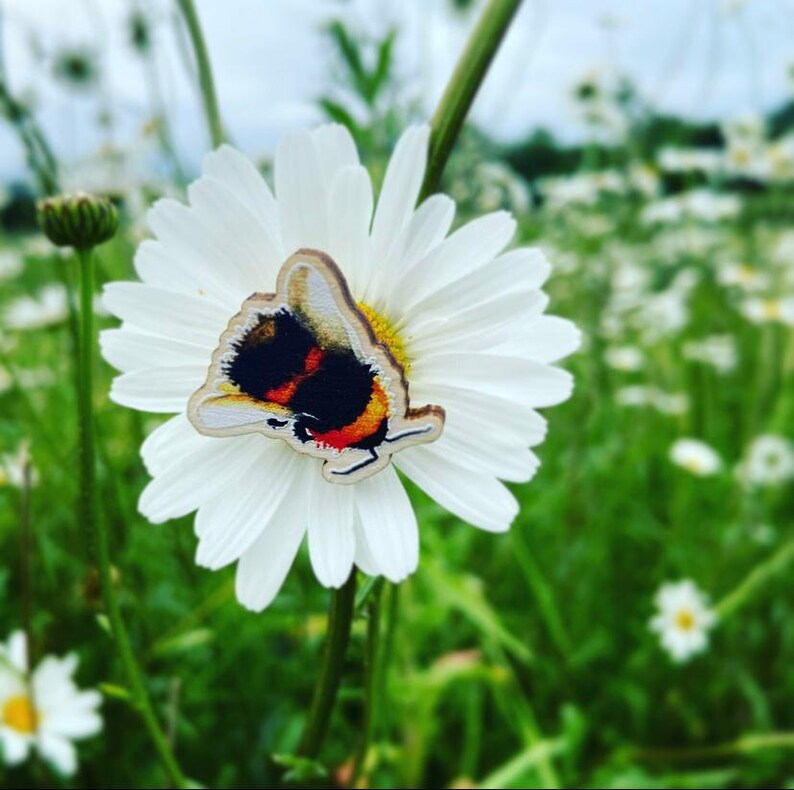 Bumble Bee Wooden Pin Badge image 1