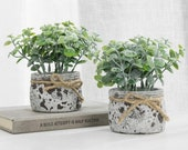 Set of 2, Faux Succulent Plants in Textured Gray Cement Planter Pots with Rope Ribbon