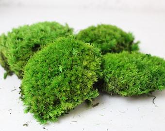 Cushion / Bunn Moss | Natural Green | Premium Preserved Boll / Pole Moss | Terrariums | Vivariums | Wall Art | Crafts & Hobbies