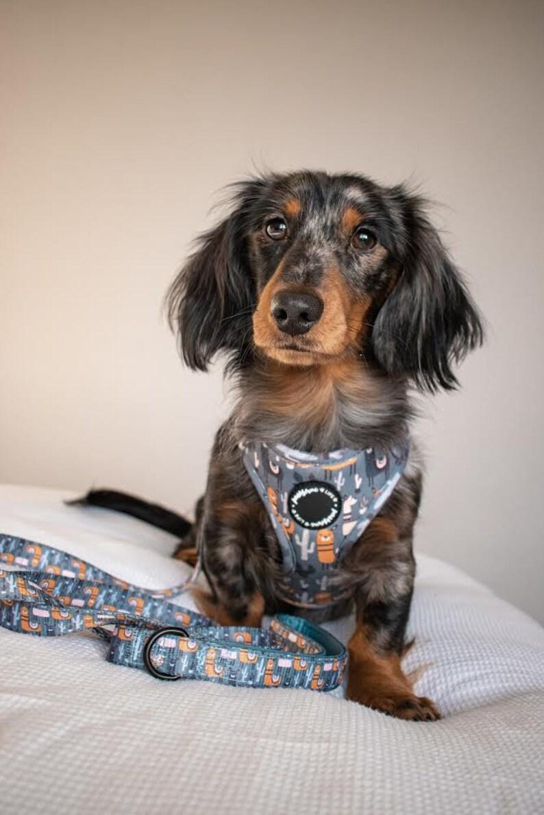 Designer Dog Collar Dog Harness Dog Collar and Lead Set Dog Chest Harness Set Cute Dog Collar and Lead Llama Dog Harness Boy Dog Collar