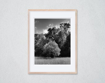 1 framed photograph 30 x 40 cm - willow on a meadow at the edge of the forest, Rhine near Speyer - silver gelatin print - analogue photography