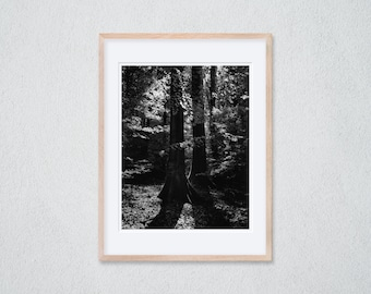1 Framed Photography 30 x 40 cm - Soft Light Falls Through the Leaves of a Beech in the Forest - Silver Gelatin Print - Analog Photography