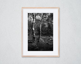 1 Framed Photography 30 x 40 cm - Birches in a Clearing in the Forest - Silver Gelatin Print - Analog Photography