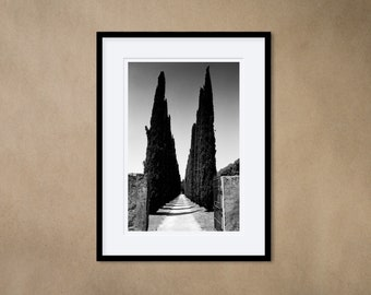 1 framed photograph 30 x 40 cm - Villa near Rome with cypresses, Italy - silver gelatin print - analog photography