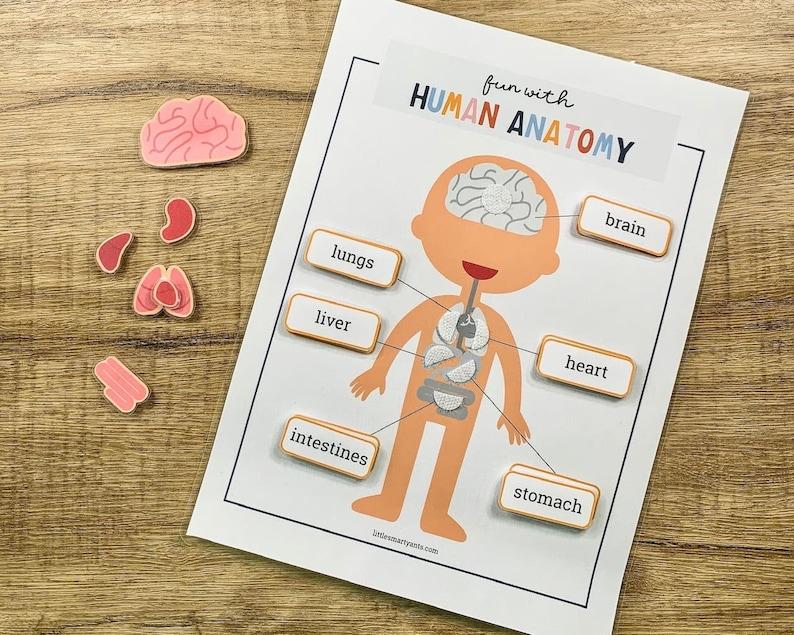 Printable Human Anatomy Game Human Body Printable Preschool image 0
