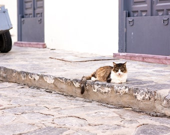 Stray Cat Relaxes on Stone Steps by an Old Cart and Traditional, Colorful Home, on the Greek Island of Hydra. High Resolution Fine Art Photo