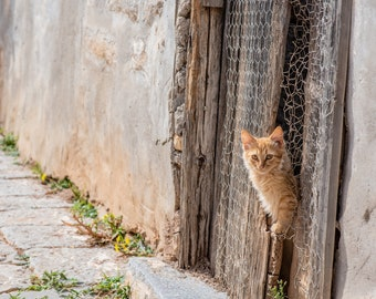Adorable Kitten Peeks Through a Rustic Fence on the Greek Island of Hydra. Two photos included! High Resolution Fine Art Photo Download.