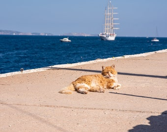 Stray Tabby Cat Relaxing By the Sea on the Greek Island of Hydra, With Sailboats. High Resolution Fine Art Photo.