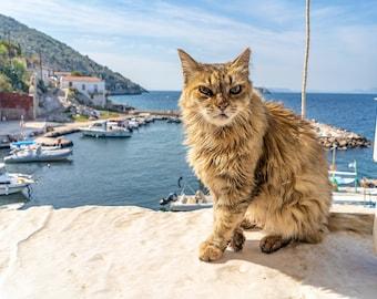 Scrappy Stray Cat Overlooks a Fishing Village on the Mediterranean Sea, on the Greek Island of Hydra. High Resolution Fine Art Photo