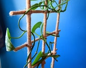 Jute Twine Wrapped Bamboo Indoor Plant Ladder Style Trellis - 24
