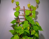 Jute Twine Wrapped Bamboo Indoor Plant Ladder Style Trellis - 18