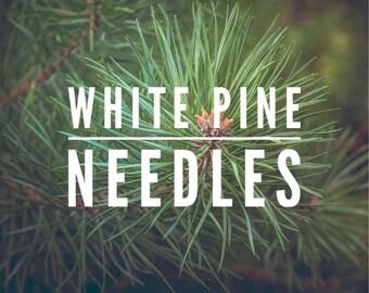 White pine tree needles for tea