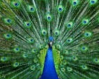 Animal Totem Reading • Reveal Your Hidden Facets And Illuminate Your Present Life, Soul Empowerment, Psychic Guidance & Power Animal, 5D