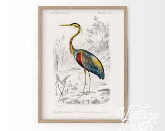 Vintage Bird Wall Art, Purple Heron Print, Botanical Poster, Birds Painting, Wedding Gift, High Quality Paper, Vintage Bird Poster