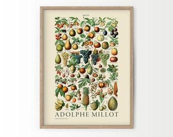 Vintage Fruit Print, Adolphe Millot Fruit, Vintage Decoration, Botanical Prints, Kitchen poster, Antique Fruit, up to 24x36, Archival Paper