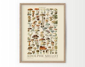 Vintage Botanical, Mushrooms Print, Kitchen Decor, Larousse Prints, Adolphe Millot Poster, Food Wall Art, High Quality Cotton Paper