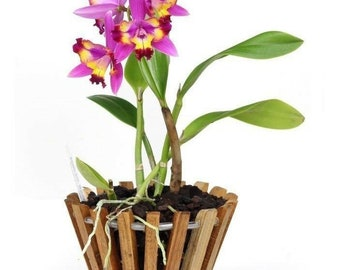 Round Orchid Basket 6in, 8in, 10in, 12in, 14in *Plant Not Included*