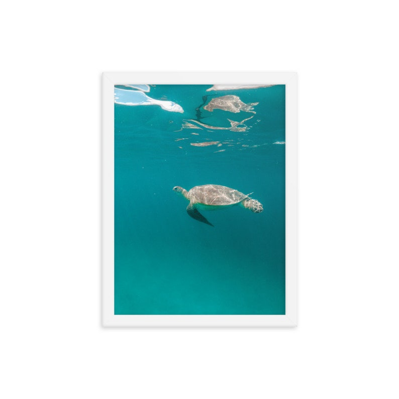 Framed Poster Print Multiple Sizes and Frames Available Turtle 7