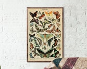 Vintage Butterfly Print - Adolphe Millot Poster Vintage Poster Office Decor Botanical Illustration Butterfly Poster Gift Idea Butterfly Art