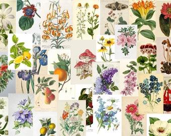 ORIGINAL ART #020--052  6 X 4 mixed media painting botanical art flowers Susan Rodebush Arts