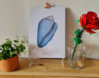 Blue cone shell - Watercolour and Ink - Print