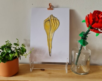 Yellow cone shell - Watercolour and Ink - Print