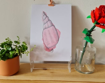 Pink Cone Shell - Watercolour and Ink - Print