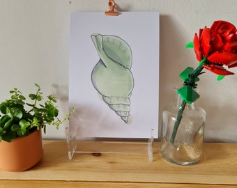 Green cone shell - Watercolour and Ink - Print