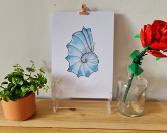 Blue Swirl Shell - Watercolour and Ink - Print