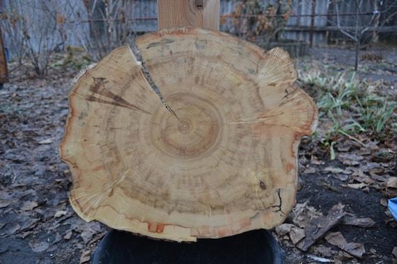 """Maple Wood Slab, Maple Slab, Wood Slab, 17 """"x 14"""" x 2 """"Table Slab"""