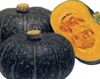 Kurinishiki Japanese Mini Pumpkin Kabocha Winter Squash Seeds Non GMO Hybrid