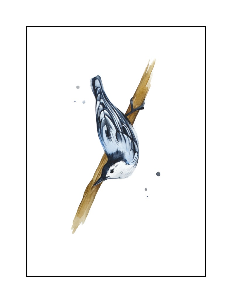 audubon White Nature art watercolor birder abstract Bird Nuthatch Watercolor Print 8 x 10 or 5  x 7 Outdoor