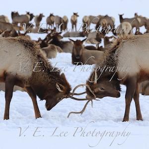 ELK in the Snow Porcelain Trinket box wildlife