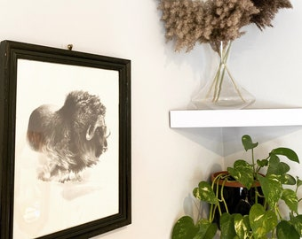 Black and White Vintage Musk-OX ) Painting