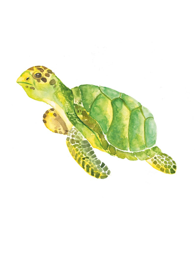 Handmade watercolour painting by Maureen Marble. Digital print Watercolor Turtle