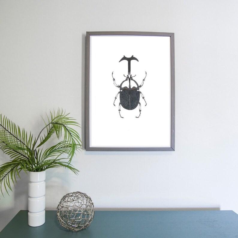 Dynastinae Rhinoceros Beetle