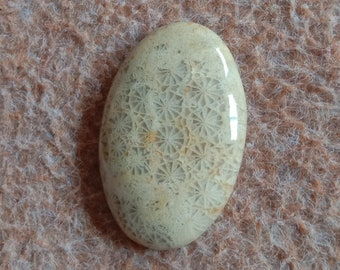 Fossil Coral Pear Designer Cabochon,Size38x20x5 MM,Fossil Coral AAA Loose Gemstone,Smooth Cabochons.Natural Gemston.