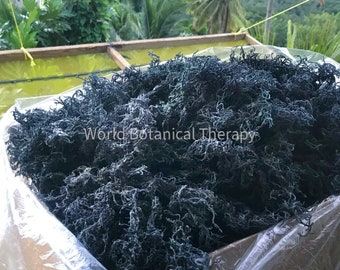 5 Lbs. + Wholesale | Bulk | The BEST Organic Green Irish Sea Moss| harvested from the clean shores of St. Lucia
