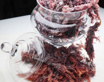 5 Lbs. + Wholesale | Bulk | The BEST Organic Purple Irish Sea Moss| harvested from the clean shores of St. Lucia