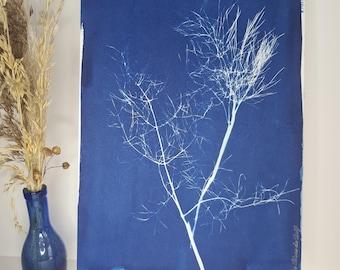 Wild fennel 2021 - Original cyanotype signed Les Bleus de Delf - Format A4 (21x 29.7 cm).