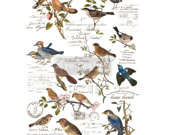New Prima Redesign Transfer POSTAL BIRDS with Free Shipping